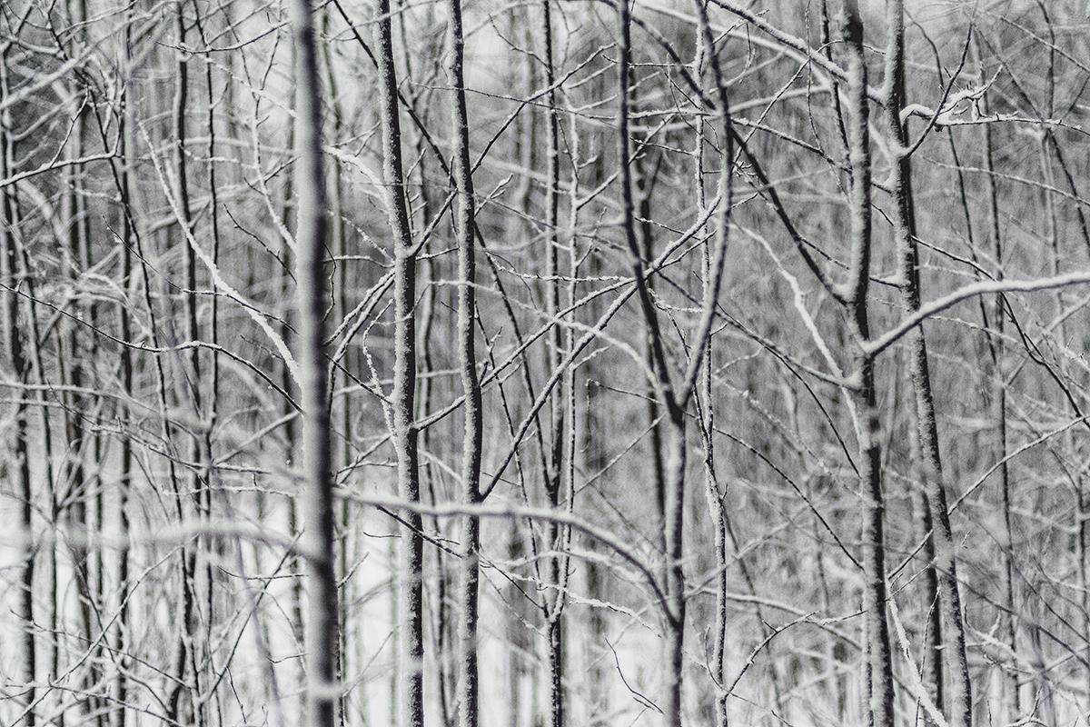 werfenweng_salzburgerland_forest