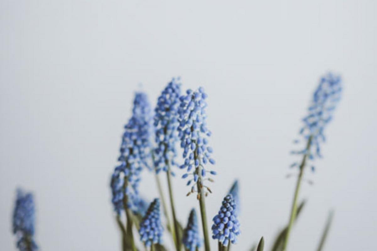 Kwadrant Parkhoven sfeer bloem